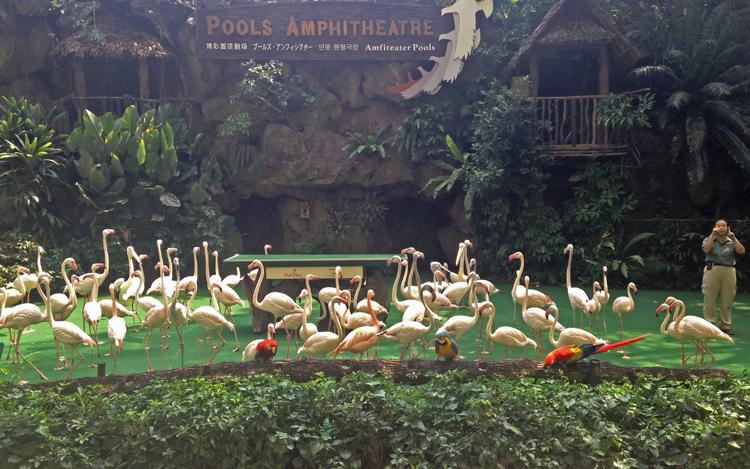 Фламинго на шоу High Flyers