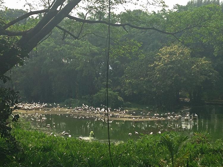 Озеро фламинго