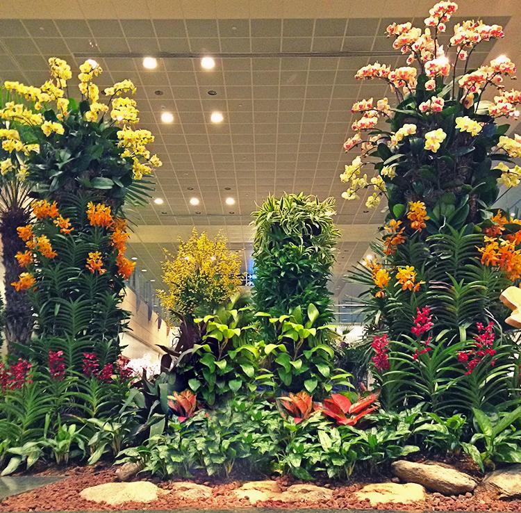 один из цветочных садов в аэропорту Чанги