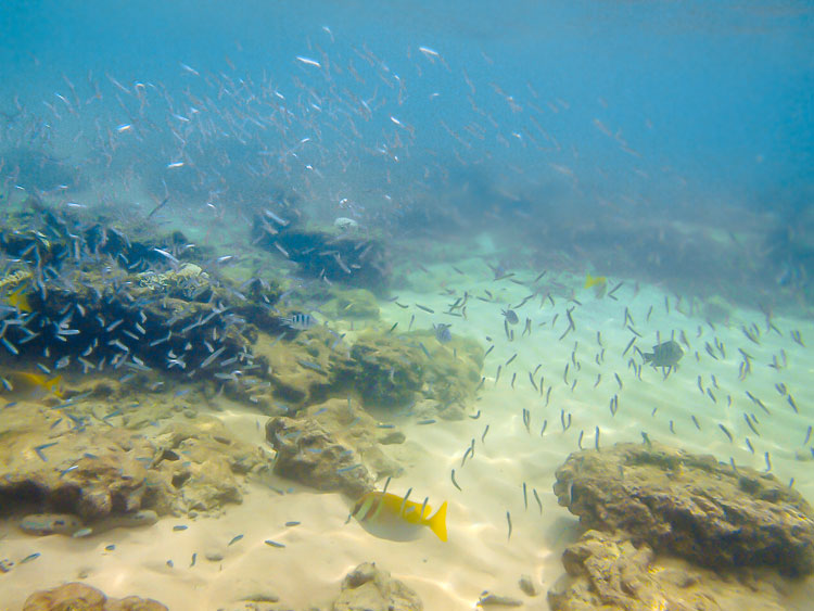 Подводная жизнь на Ко Тао